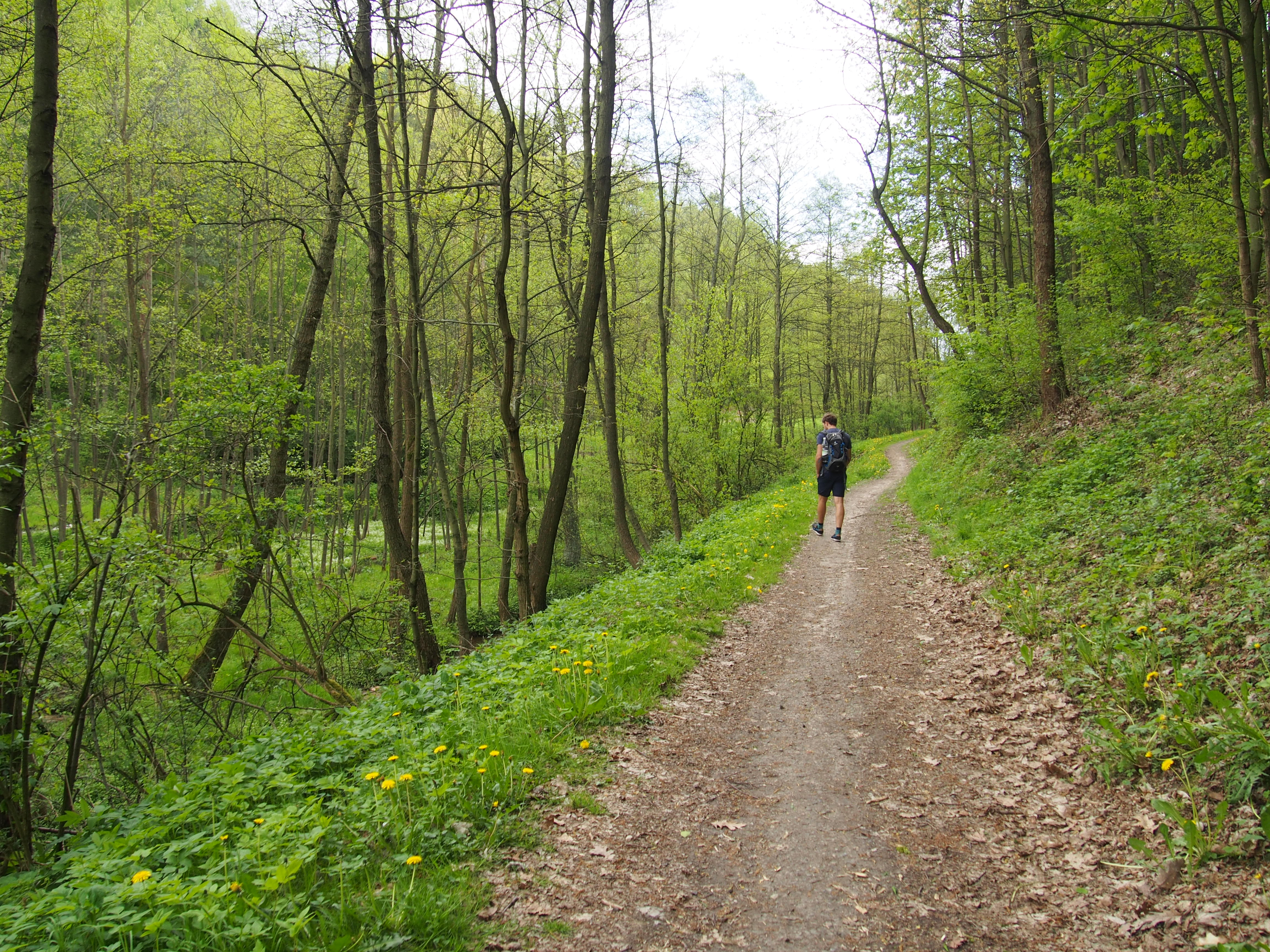 Dolina Brzoskiwnki