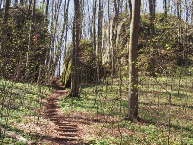 Ścieżka dydaktyczna po rezerwacie