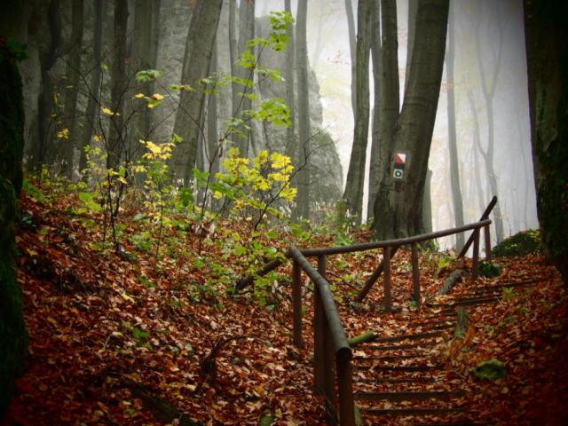 Drewniane schody na szlaku w rezerwacie Pazurek