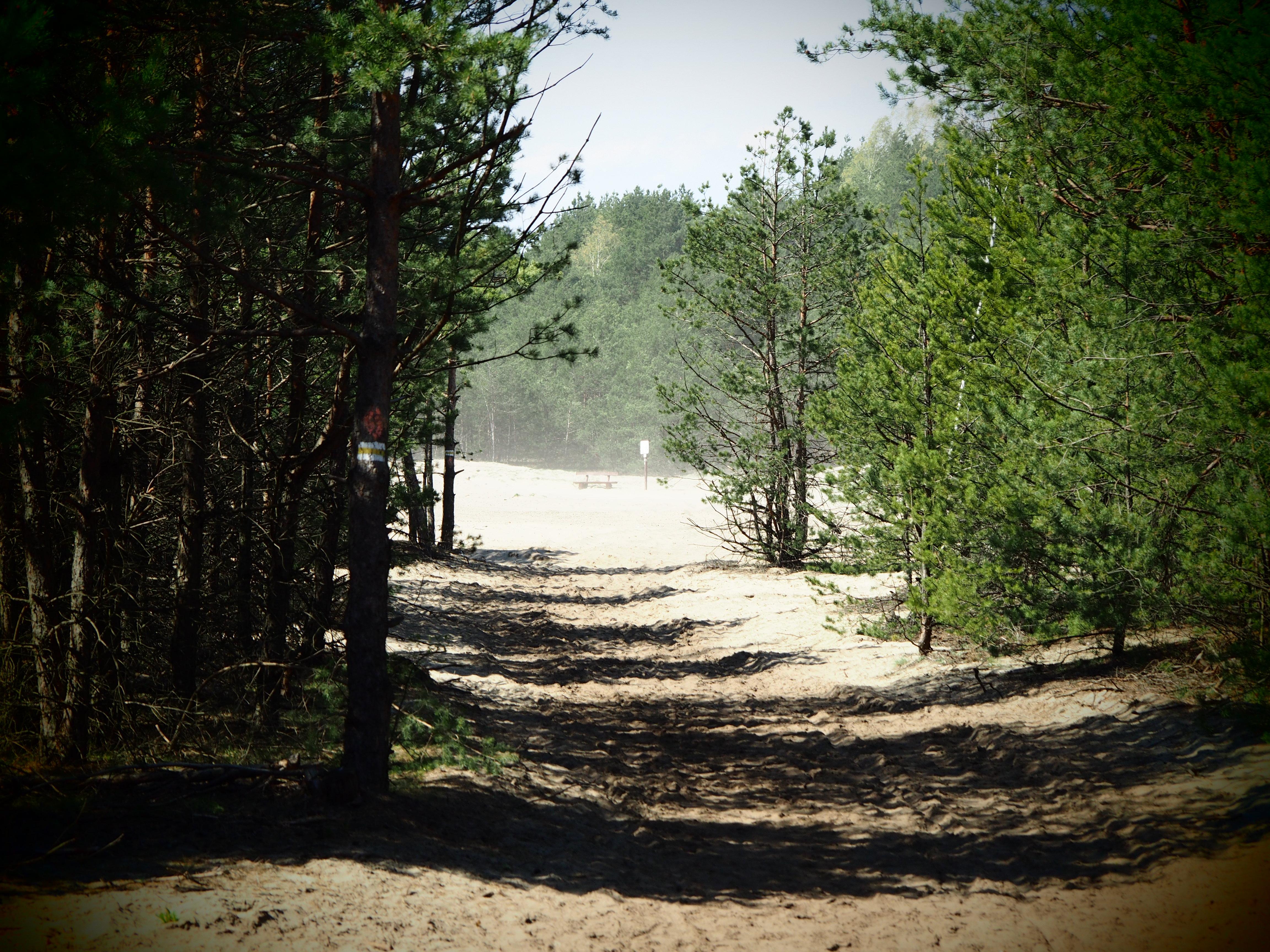 Szlak turystyczny na Pustyni Błędowskiej