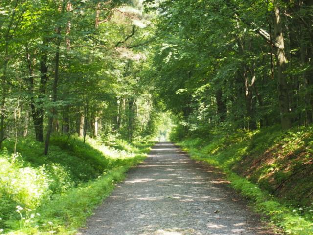 Las Bronaczowa, główna droga
