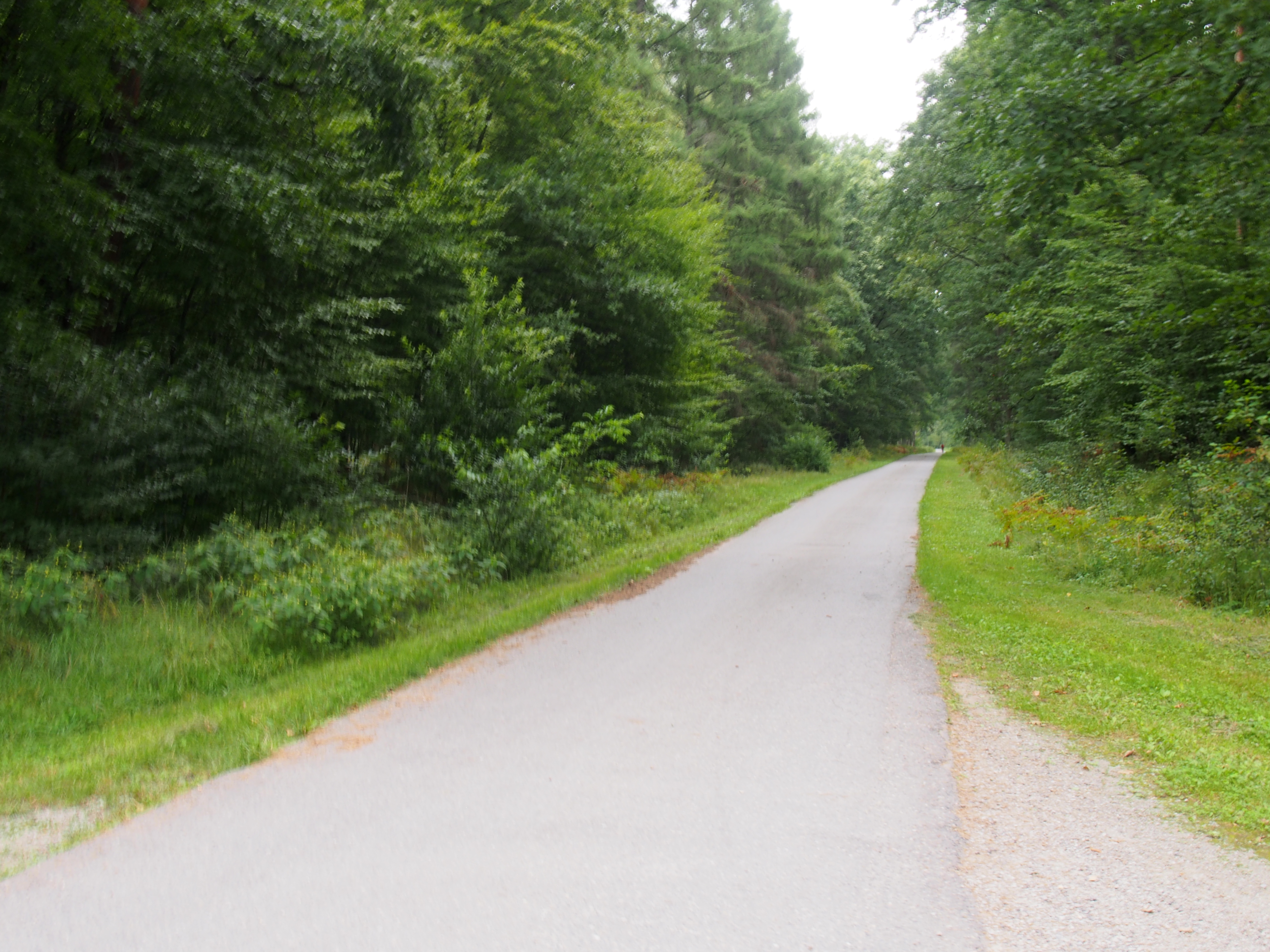 Ścieżka rowerowa przez Puszcze Niepołomicką