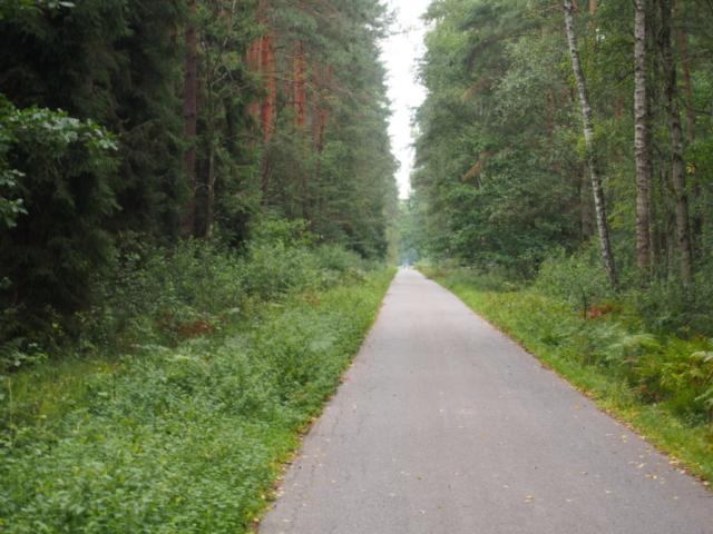 Droga asfaltowa w Puszczy Niepołomickiej