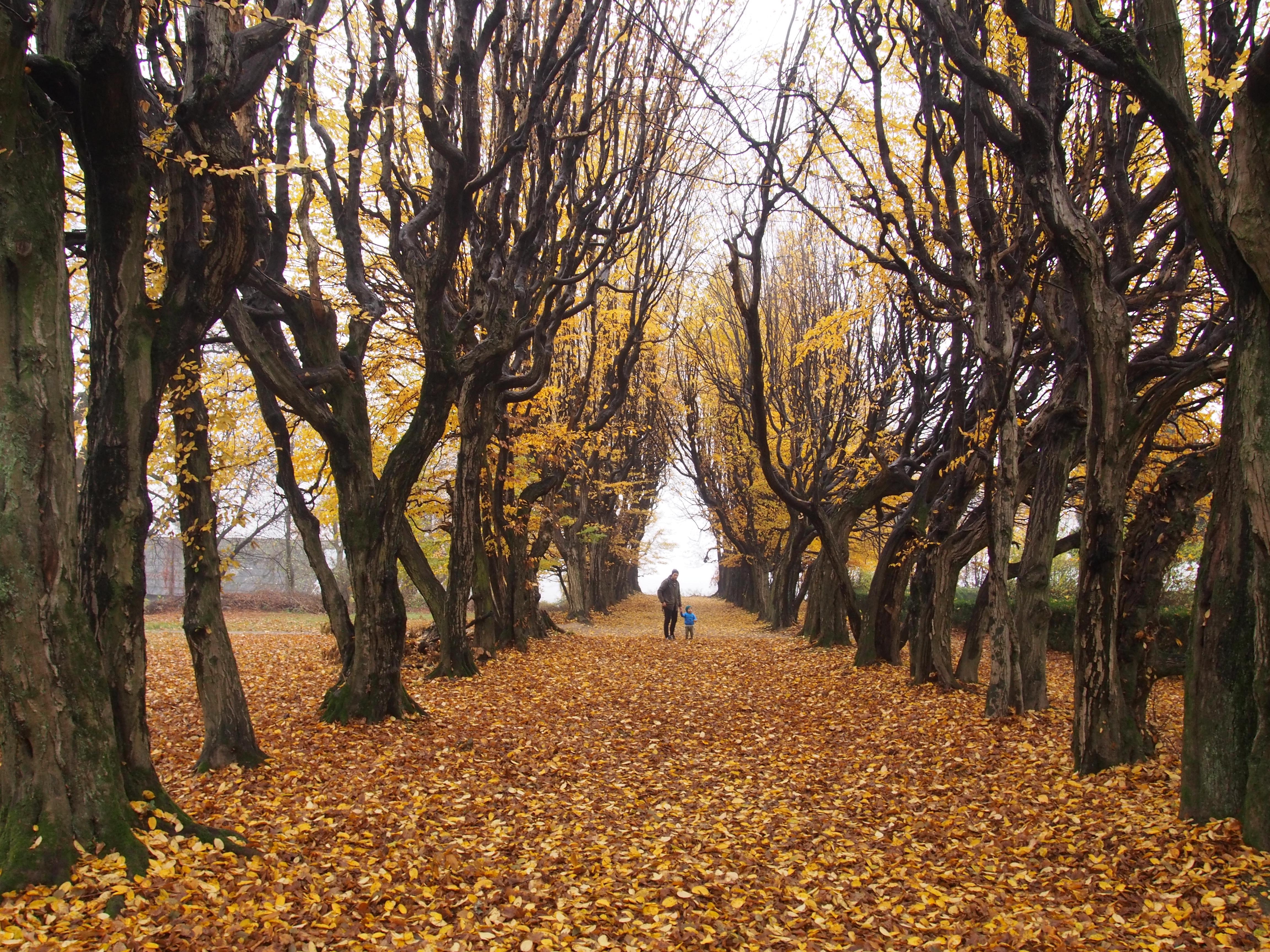 Dwór i park w Mogilanach