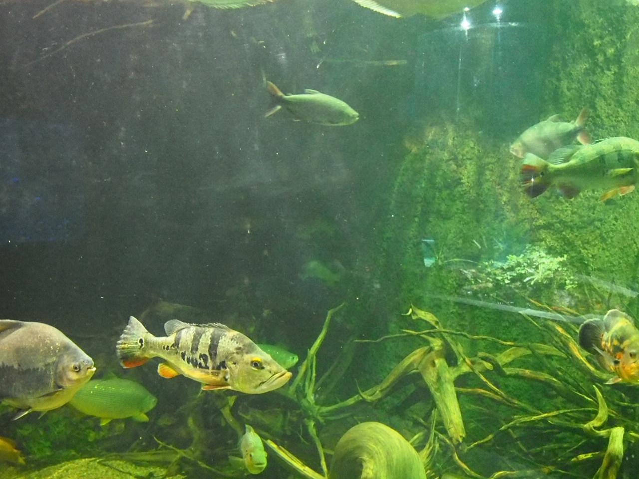 Akwarium z średniej wielkości rybami