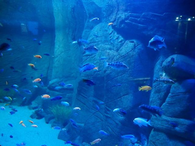 Dużo małych rybek w akwarium podświetlonym na niebiesko