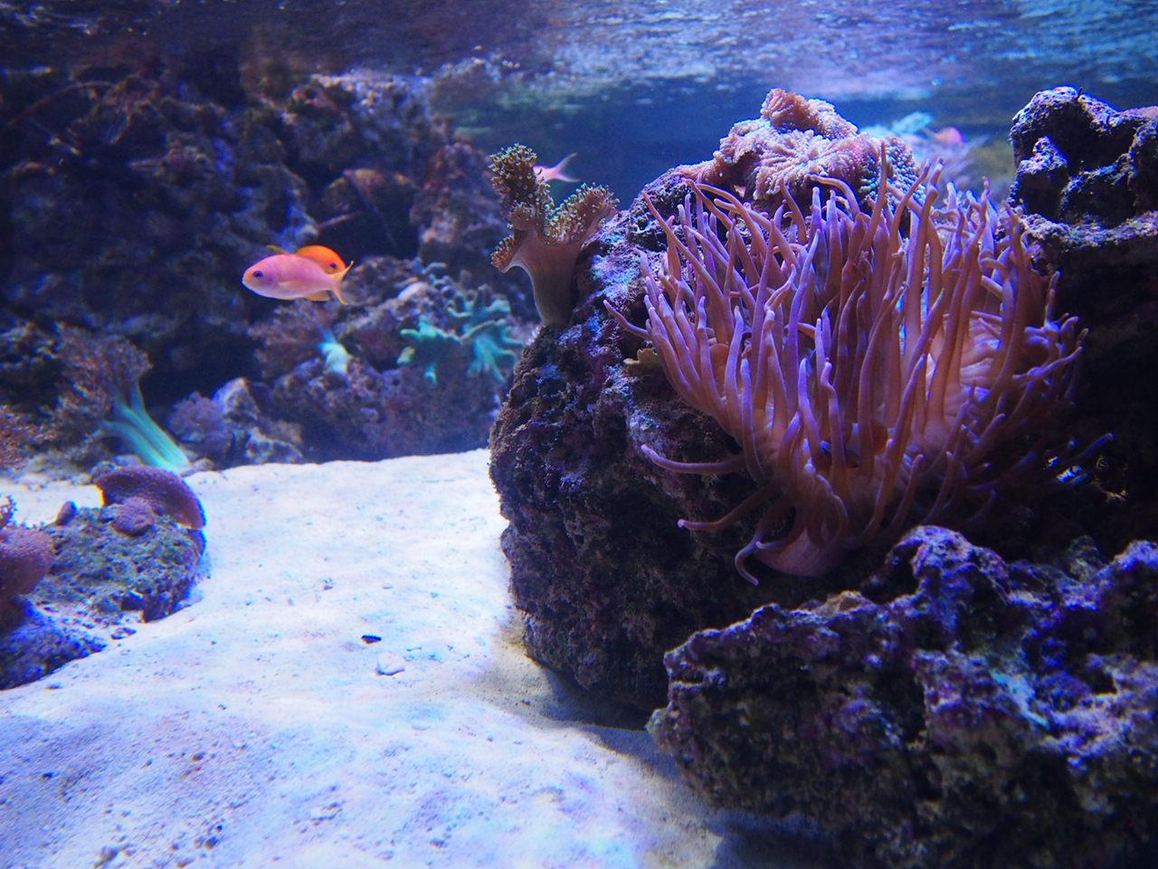 Ryby na rafie koralowej