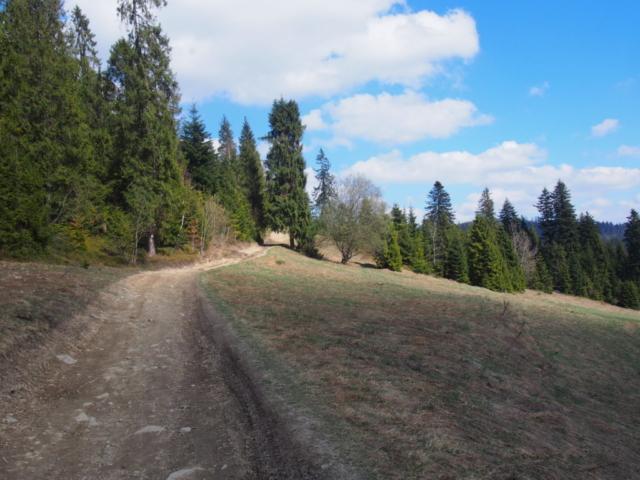 Polana obrośnięta świerkowym lasem