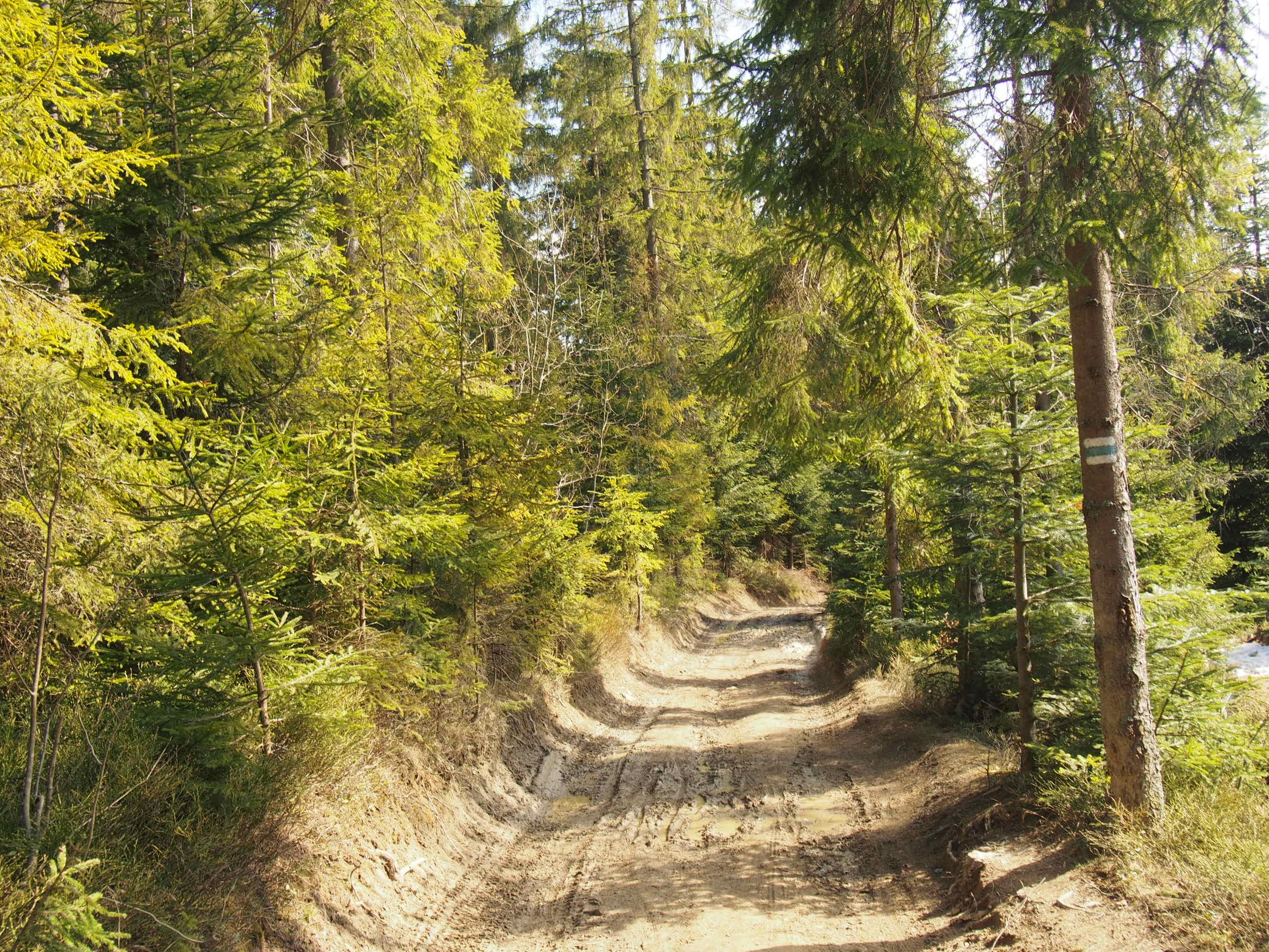 Droga przez las prowadząca do schroniska