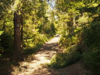 Szlak prowadzący lasem do schroniska