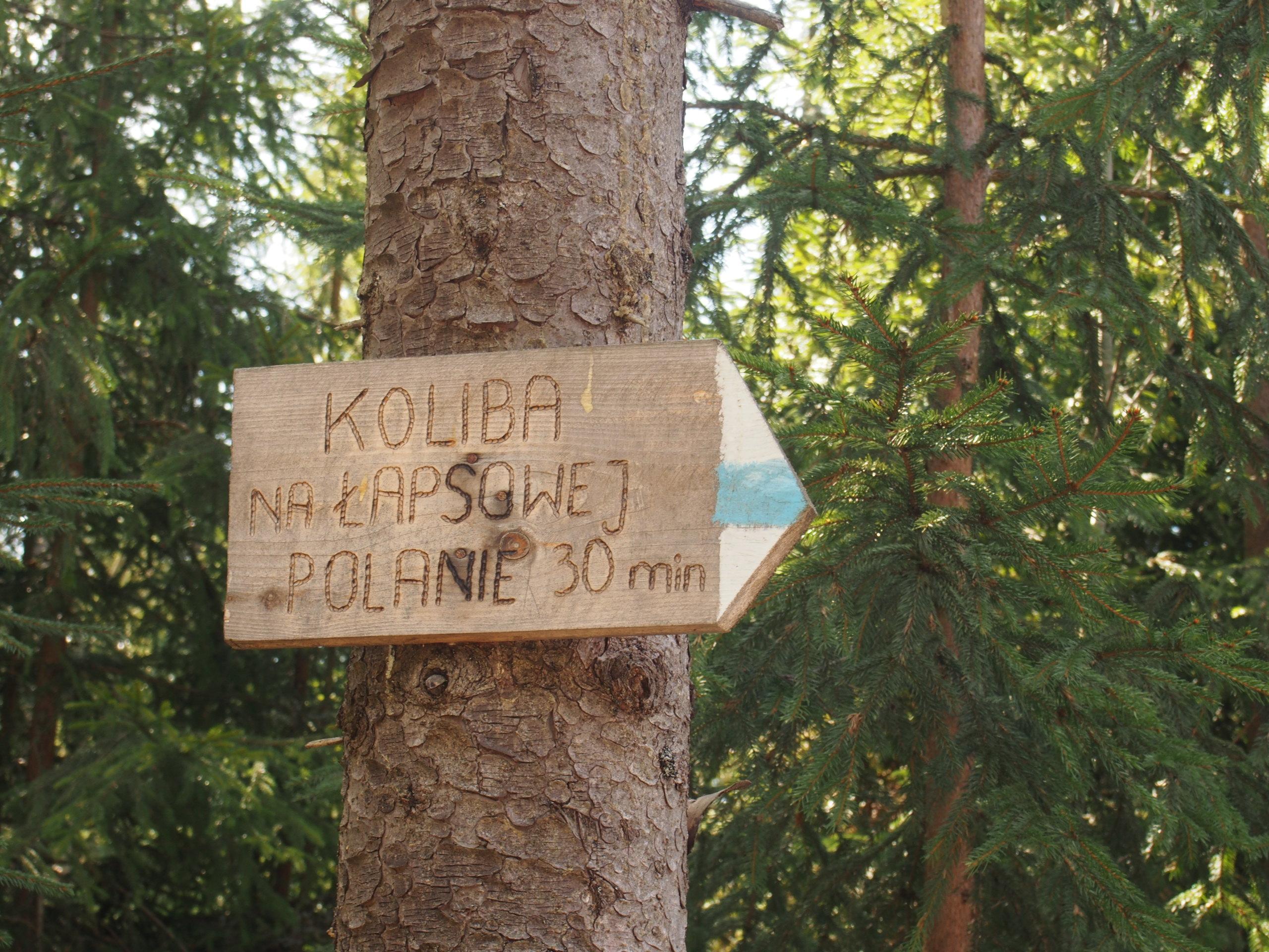 Tabliczna z niebieskim szlakiem turystycznym - Koliba na Łapsowej Polanie 30 min