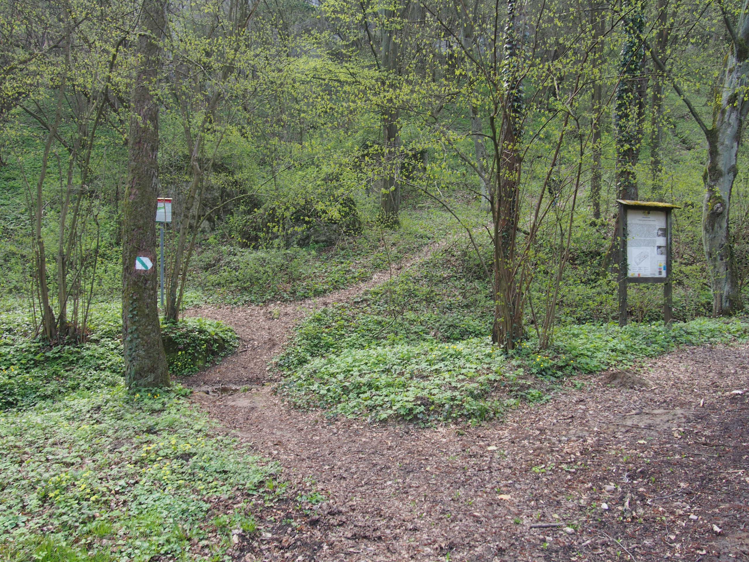 Las, tablica informacyjna, szlak z wejściem do rezerwatu