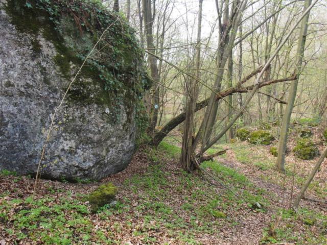 Duża skała obrośnięta bluszczem w lesie