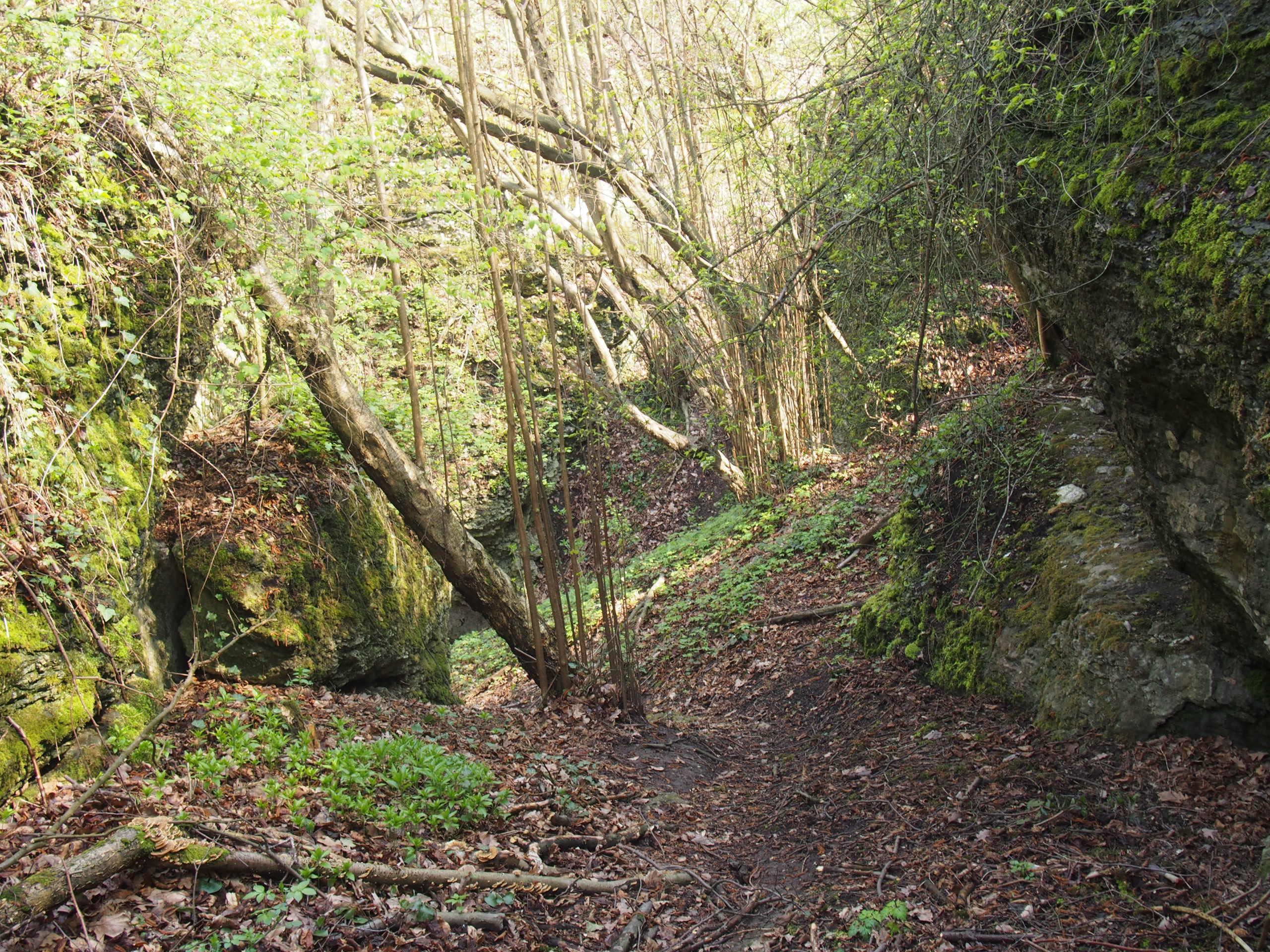 Bardzo zarośnięty szlak pieszy między skałami