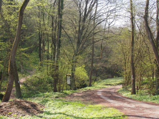 Czerwony szlak turystyczny i miejsce odbicia na ścieżkę dydaktyczną