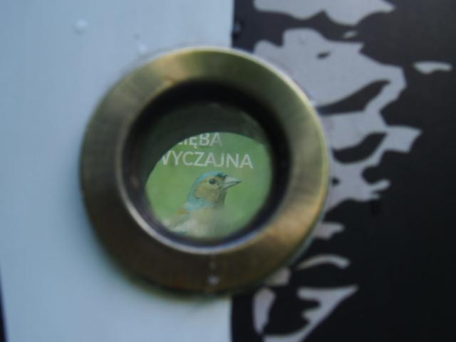 Zdjęcie zięby widziane przez wizjer