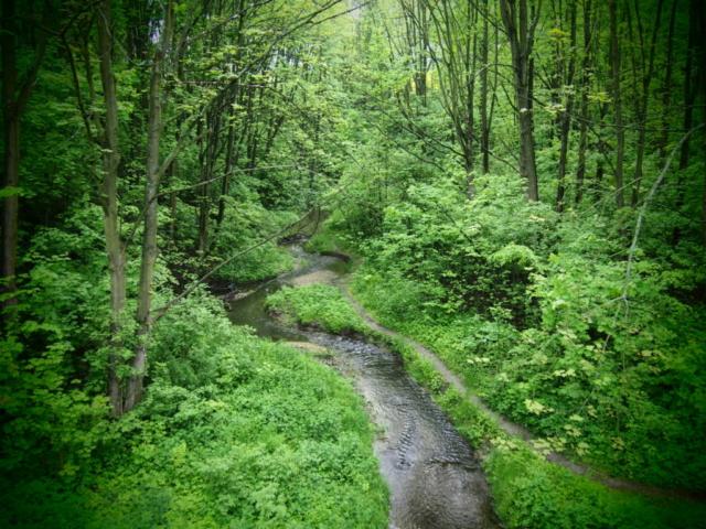 Rzeka Bibiczanka płynąca przez las