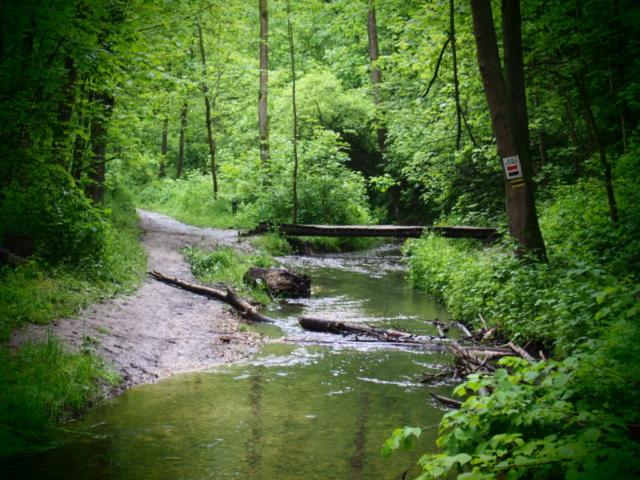 Ścieżka w lesie i drewniany mostek nad rzeką
