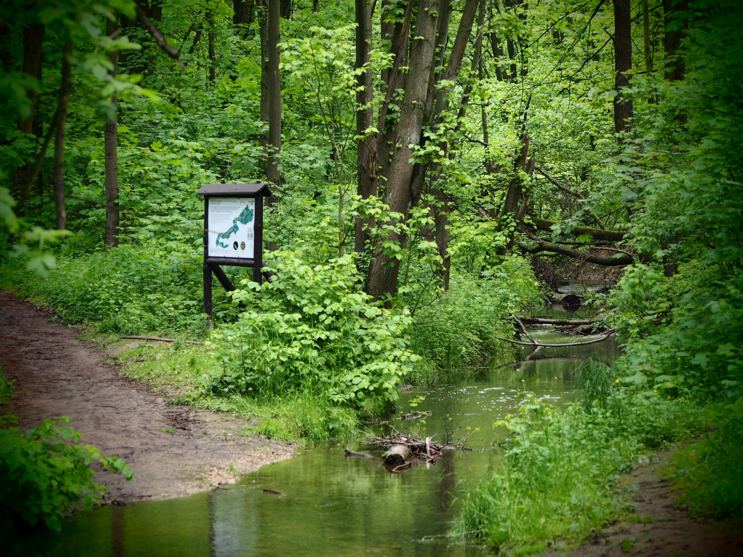 Ścieżka w lesie z płynącą obok rzeką