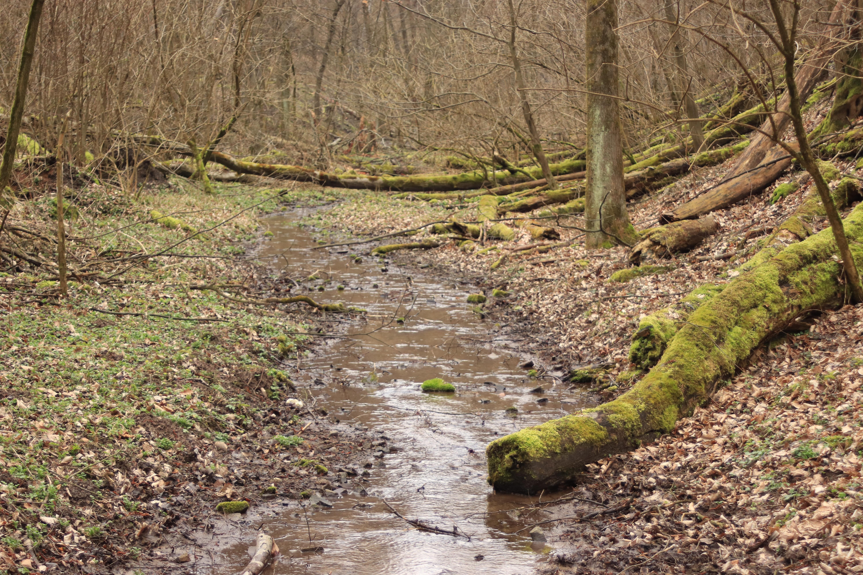 Dolina Potoku Rudno