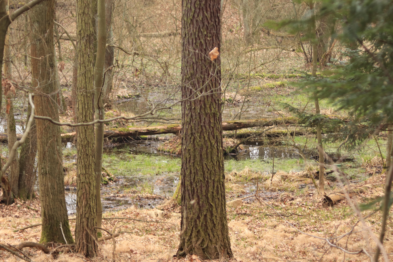 Potok Rudno w lesie