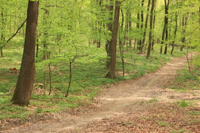 Ścieżka dydaktyczna w lesie