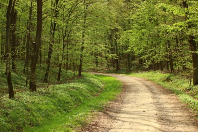 Szeroka bita droga w lesie