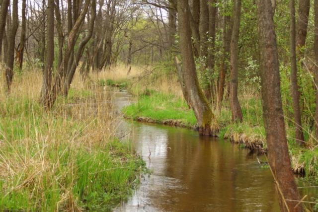 Rzeka w lesie Biała Przemsza
