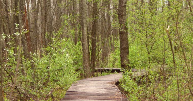 Lasy Błędowskie