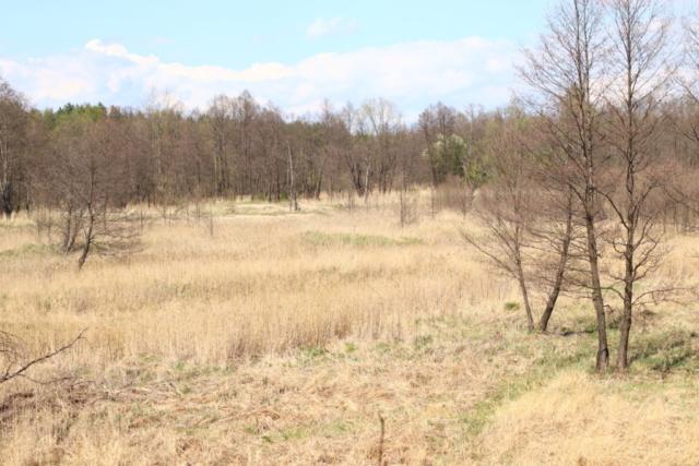 Widok na łąki