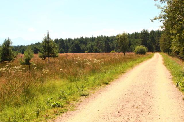 Polna droga prowadząca do lasu
