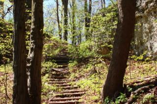 Drewniane schody w lesie wśród wapiennych skał