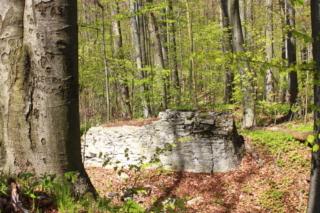 Wapienny mur w lesie