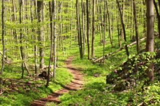 Ścieżka prowadząca przez bukowy las