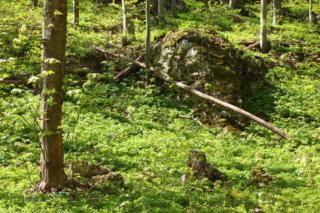 Skała wapienna w lesie